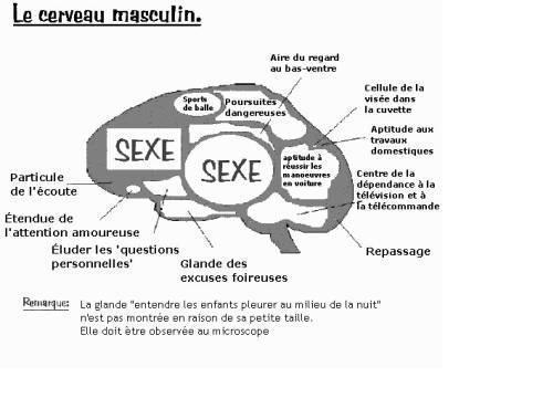 difference-entre-cerveau-femme-homme-2