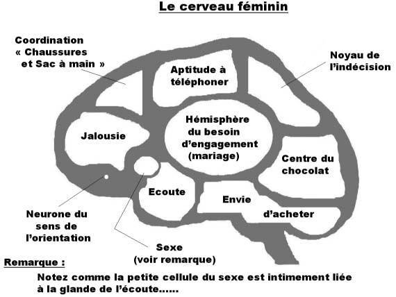 difference-entre-cerveau-femme-homme-3