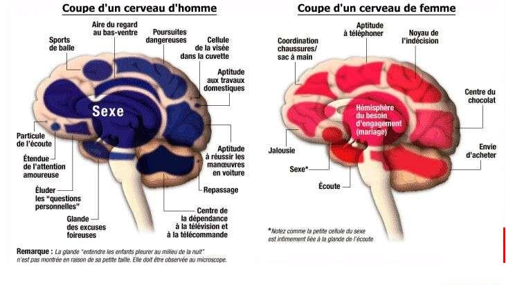 difference-entre-cerveau-femme-homme