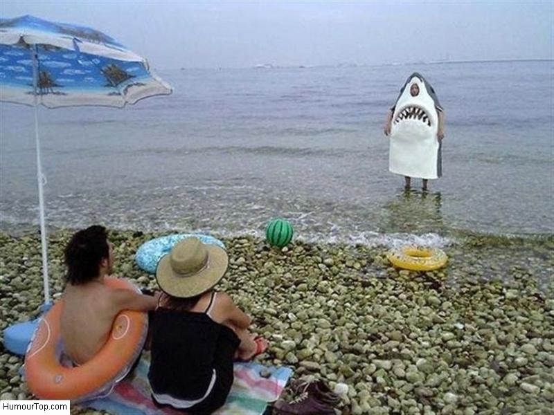 Requin_sur_la_plage