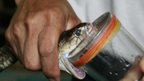 trayeur-de-serpents